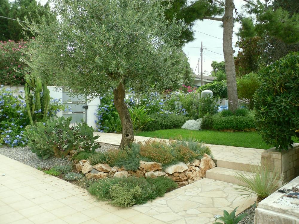 Vivai mello alessandro realizzazioni giardini - Alberi da giardino di piccole dimensioni ...