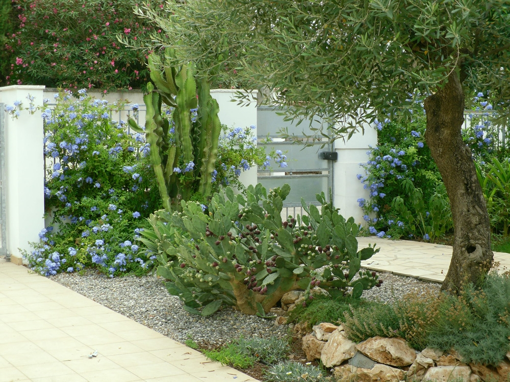 Vivai mello alessandro realizzazioni giardini - Piante x giardino ...