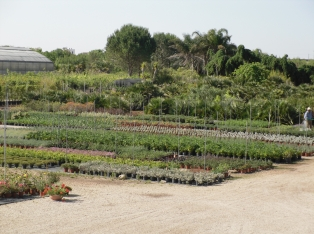Produzione Piante nel Salento